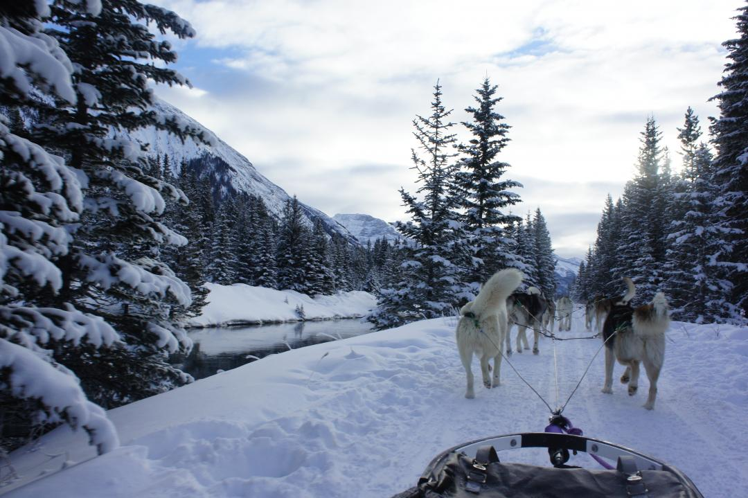 Montana Dog Sled Tours