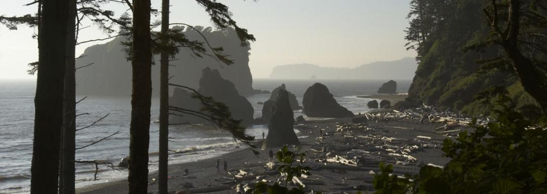 Canon Beach and trees